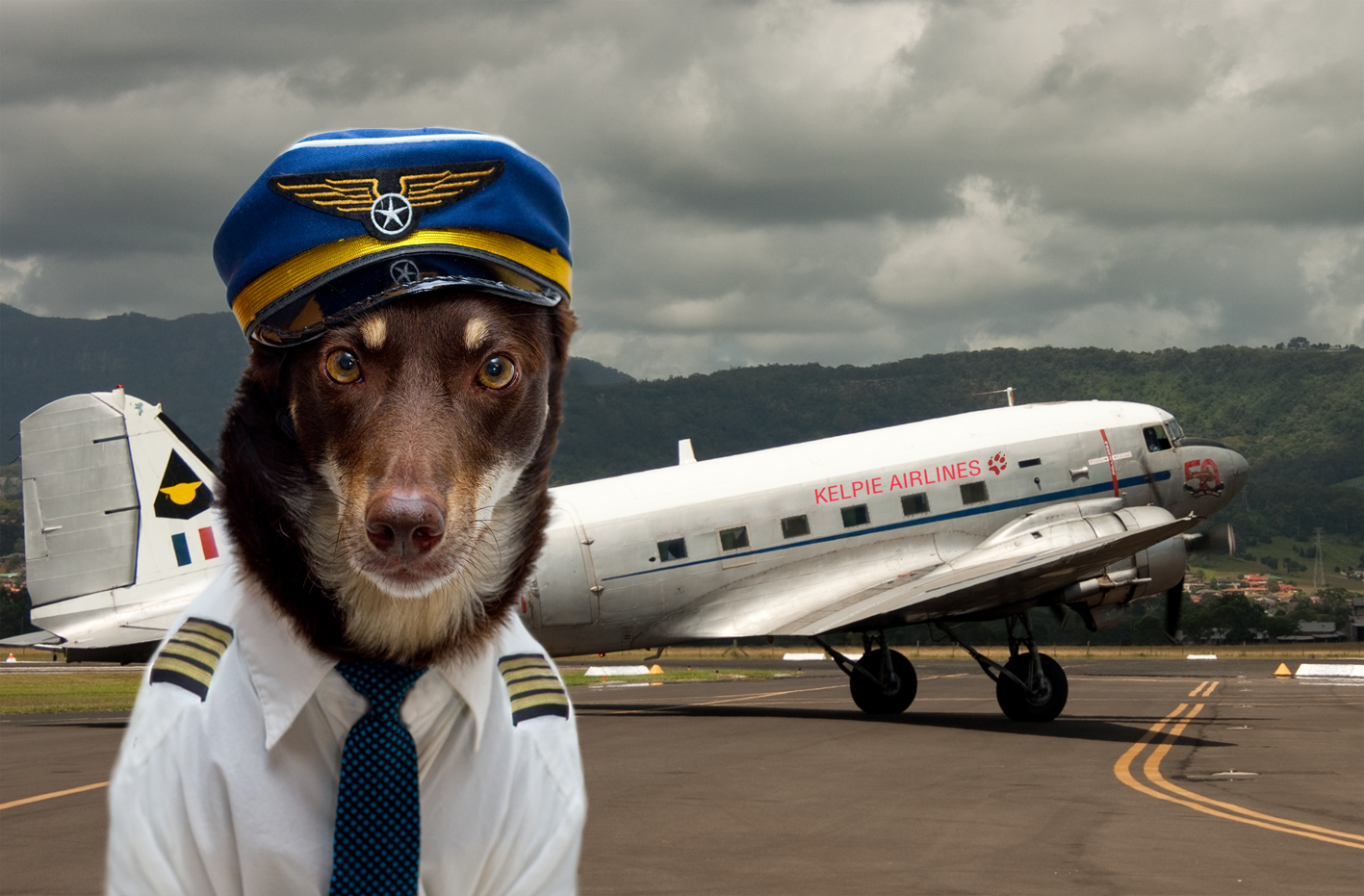 pet friendly airlines