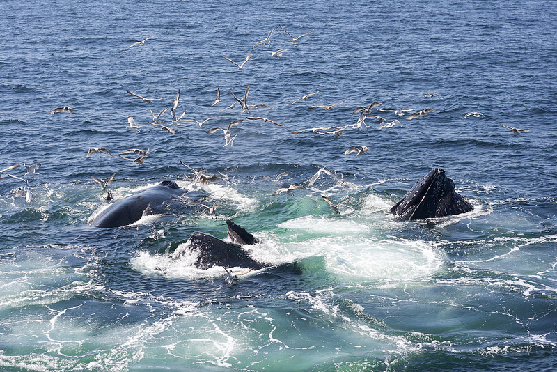 5 Basic Things You Should Know About Whale Watching
