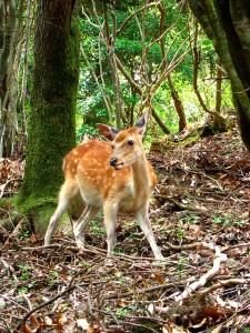 Deer - Visit Japan