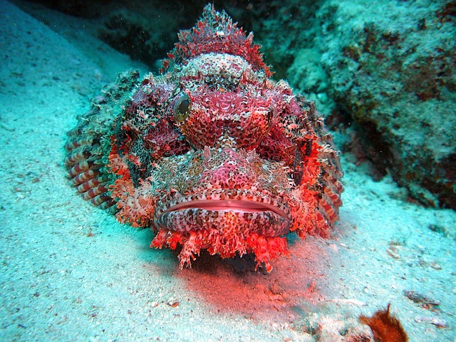 Dragon's Head Red Sea Egypt Underwater Divers