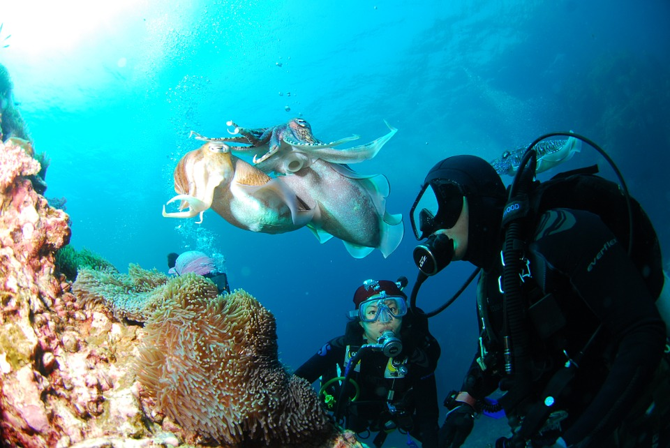 Famous Coral Reef and Best Diving Destinations In The Philippines