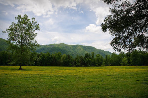 Nature at Cades Cove