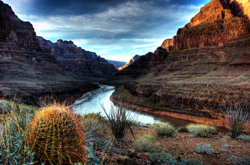Nature at the Grand Canyon