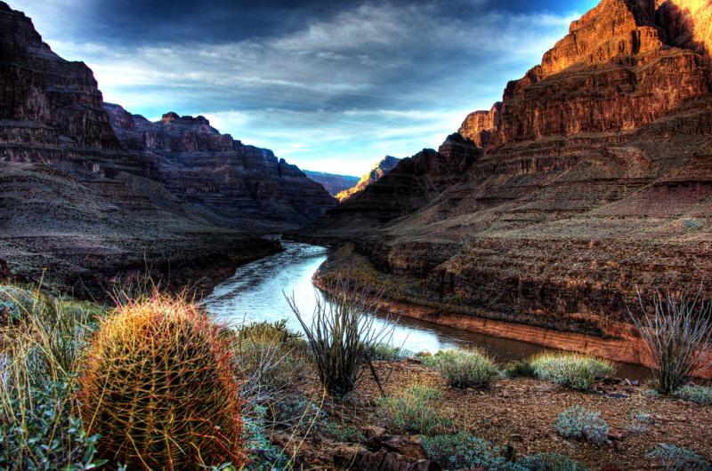 Nature at the Grand Canyon