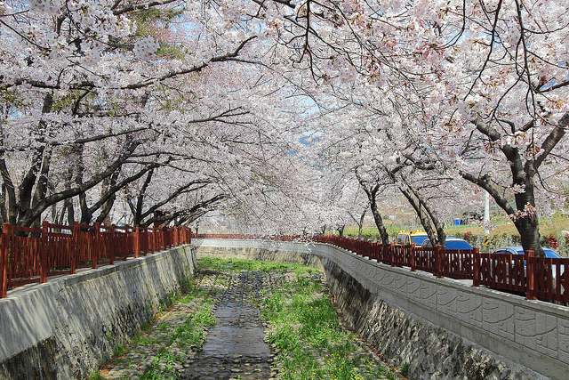 Travel South Korea - Kyeong-Wha Station, Jinhae