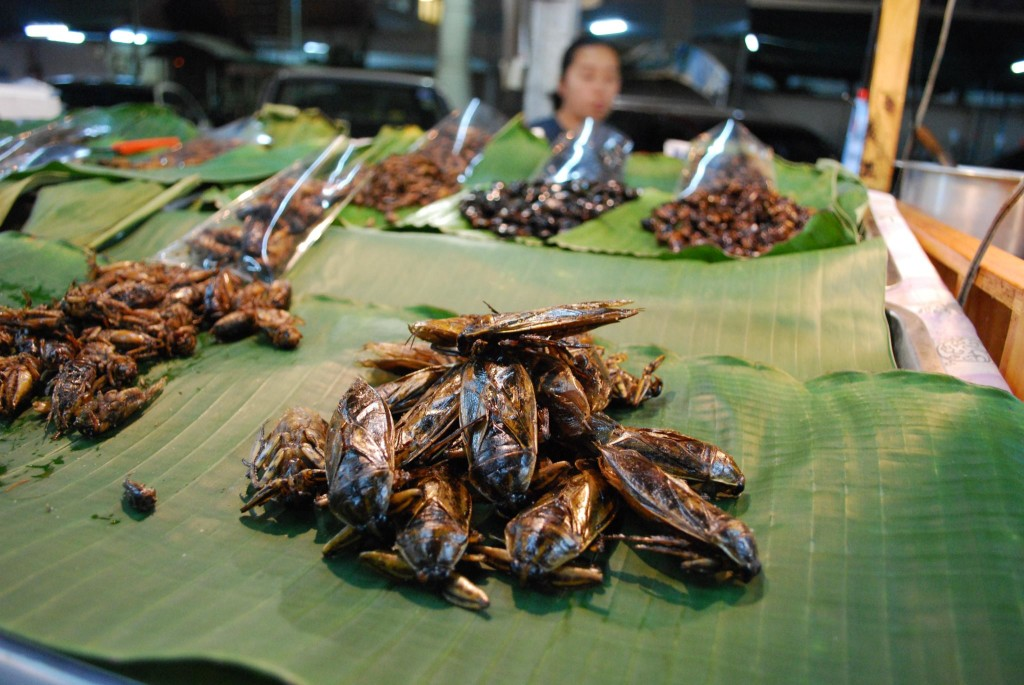 fried water bugs - Thailand