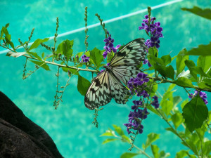 11 Fun Things to Do at Mambukal Mountain Resort in the Philippines, 3 are Great Fatigue Busters! - Butterfly garden