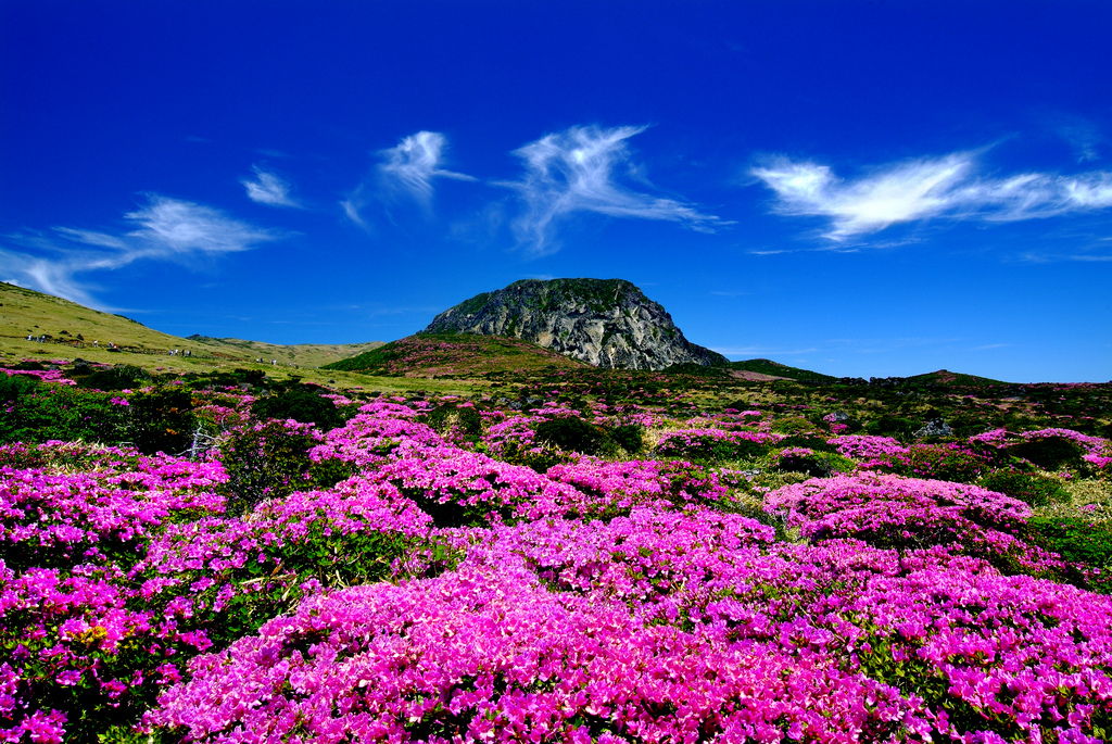 Amazing Jeju Island! Top 12 Attractions in South Korea's Holiday Island (4)