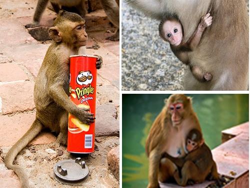 Monkey Buffet Festival - Lopburi Thailand