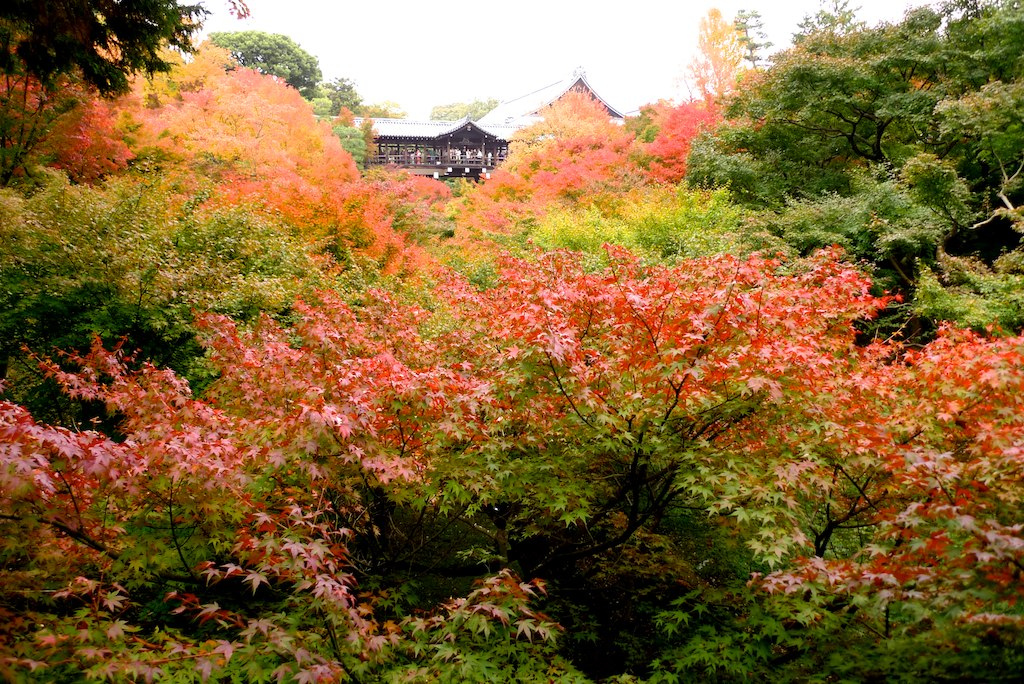 The Colors of Autumn 7 Places to Enjoy the Autumn Scenery in Japan - Tofukuji