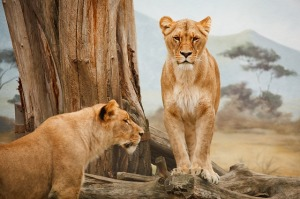 Travel South Africa - South African Safari