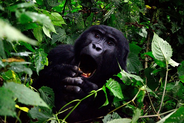 Travel Uganda - Bwindi National Park