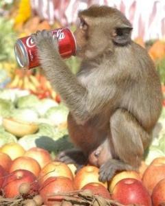 Visit Lopburi - Monkey Buffet Festival