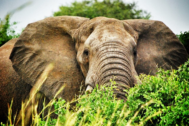 Visit Uganda - Safari