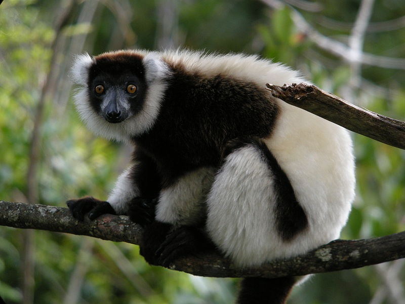 Madagascar Holiday - Andasibe-Mantadia National Park
