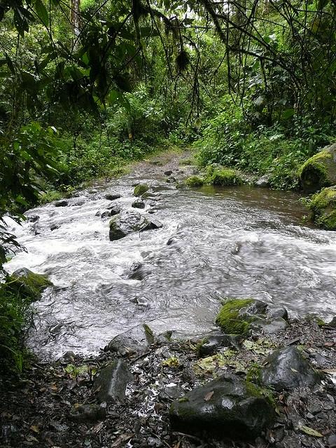 Panama Hiking - Sendero Los Quetzales