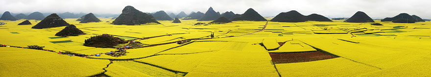 Canola Flower Fields, China 1