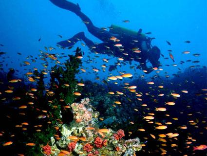 Hon Mun diving in Nha Trang Vietnam