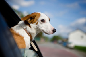 Best Dog Travel Tips