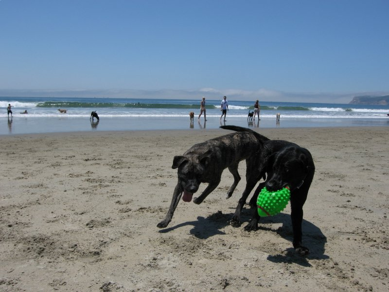 Traveling With Dogs - Best US Beaches for Your Dog Friend