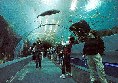 New-England-Aquarium-Things to see in Boston