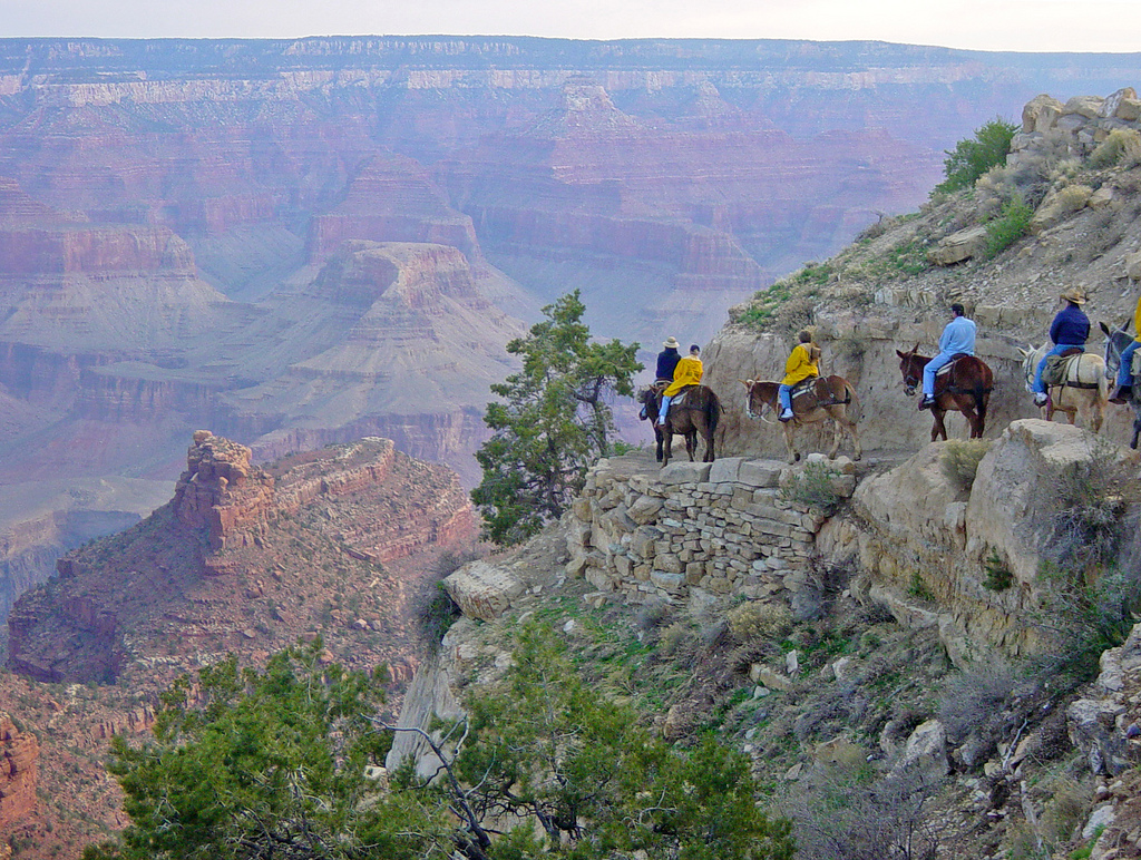 camping grand canyon Mule-Ride-Grand-Canyon