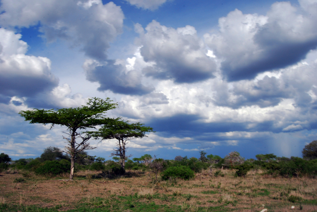 Selous tanzania holidays