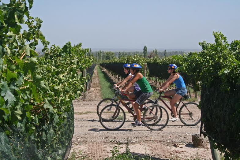 bike in wine farm