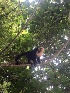 Monkey at Manuel Antonio National Park
